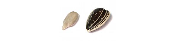 Seeds/Seedlings