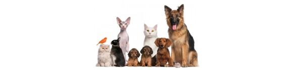Pets/Animals
