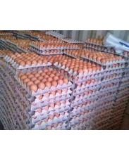 Jumbo eggs for sale