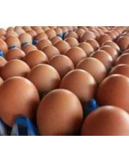 Eggs supply