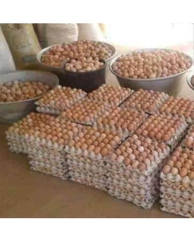 Fresh eggs supply
