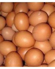 Fresh jumbo eggs supply