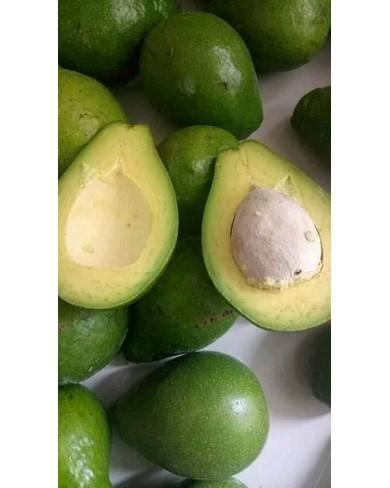 Dwarf hybrid avocado