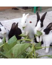 Arizona Rabbits & Bunnies Unique Farm