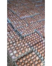 Fresh midium size eggs for sale