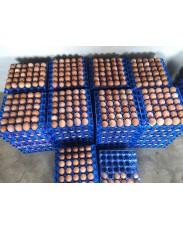 Egg for sale