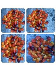 banga seed