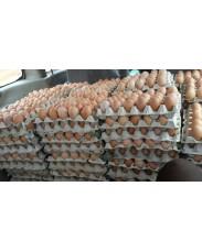 Eggs (Izzat Farms)