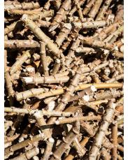 Cassava Stem