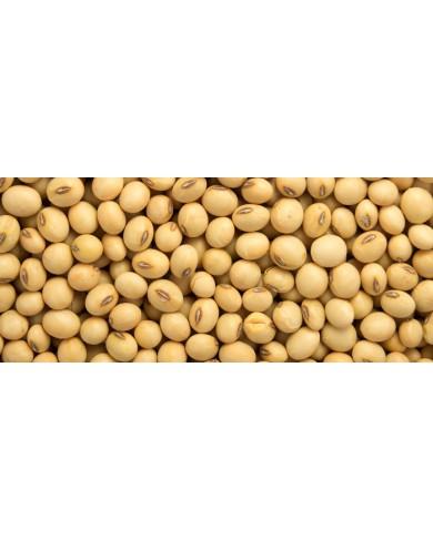 Soya Beans (seed)