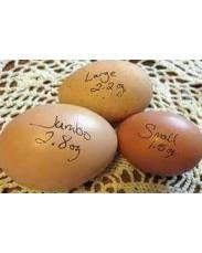 Jumbo size eggs