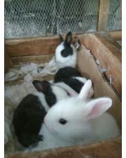 Origami Rabbit farm