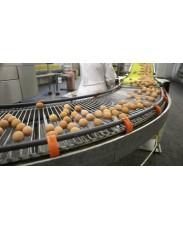 Fresh Quality Eggs