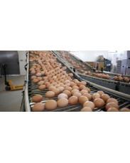 Fresh Jumbo Eggs