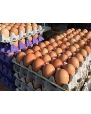 Jumbo Size Crates Of Eggs