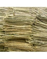 White 419 and Yellow vitamin A Cassava Stem